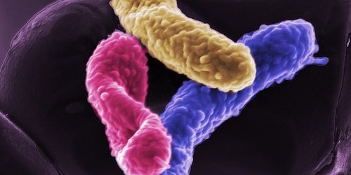 Study Reveals Our Microbiomes Behave Differently in Sickness and Health